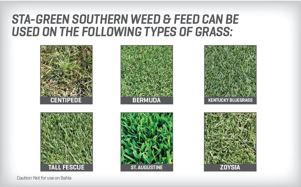 Rose Glen North Dakota Try These Weed And Feed For Bermuda